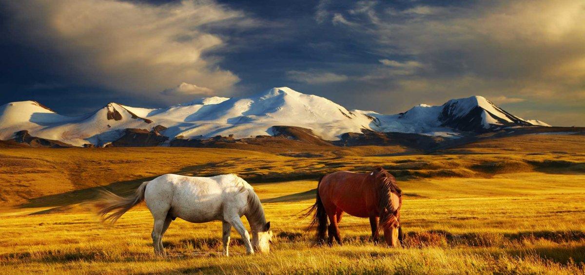 Počasni konzulat Mongolije